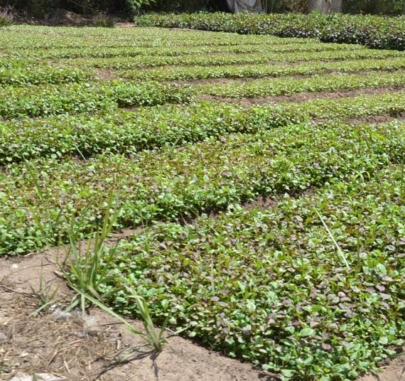 diversificacion-agricola-3