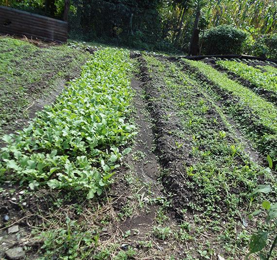 Fortalecimiento de la agricultura 8